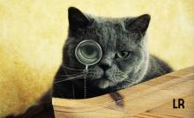 7-caracteristicas-de-una-buena-investigacion-de-mercado